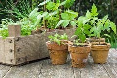 Plantings. Different plants in flower pots Royalty Free Stock Images