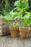 Plantings Stock Images