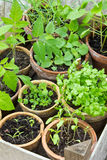 Plantings Royalty Free Stock Photography
