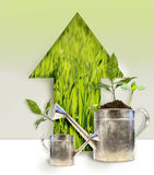 Plantings with watering can. On colored background Royalty Free Stock Photo