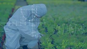 Plantkundigen bespuitende installaties stock video