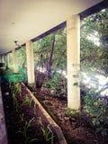 Plantland Стоковое Фото