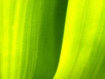 plantleaf Стоковое Фото