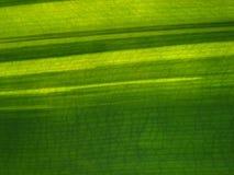 plantleaf Стоковое Изображение RF