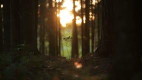 Plantleat grodd eller litet litet träd i den magiska skogen stock video