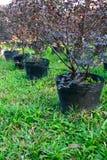 Plantlet садовничая заводов Стоковое фото RF
