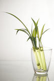 Plantlet Stock Images