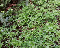 Plantlife of the Forest Floor. The rainforests incredibly lush floor supports life for many organisms Stock Photography