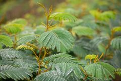 Plantlife in Rain Storm. Plants taking in the rain during a storm at a nature preserve in California Stock Photo