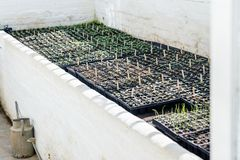 plantor är i ett separat rum arkivfoton