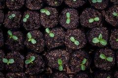 Plantor är klara för att plantera för art till Royaltyfria Bilder