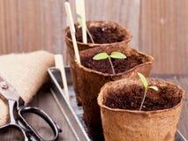 Plantor Fotografering för Bildbyråer