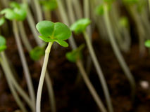 plantor Royaltyfri Bild