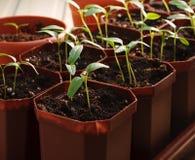 Plantor Arkivfoton