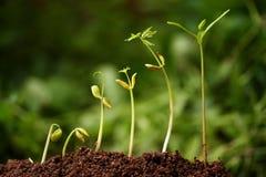 plantor Arkivbilder