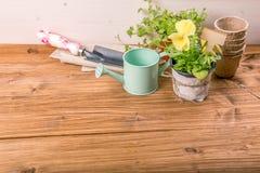 Plantor av en blomma för att plantera i en kruka på en vit trätabell med trädgårds- hjälpmedel Begreppet av att arbeta i trädgård Arkivbilder
