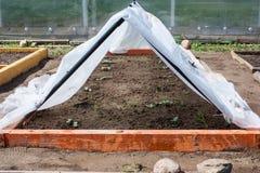 Plantor av gurkor som planteras i en trädgård i ett litet växthus Royaltyfri Bild