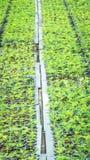Plantor av växten Arkivbilder