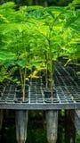Plantor av växten Royaltyfria Bilder