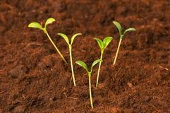 plantor för grön livstid för begrepp nya Royaltyfri Fotografi