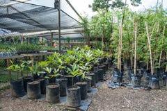 Plantor i den Bogota botaniska trädgården Arkivfoto