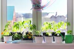 Plantor i krukor på en fönsterbräda Royaltyfri Fotografi