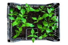 Plantor i plast-svart Arkivbilder