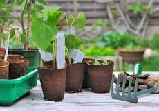 Plantor i trädgård Royaltyfri Foto