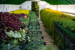 Plantor i växthuset Royaltyfri Fotografi