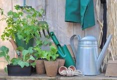 Plantor och arbeta i trädgården Arkivfoto