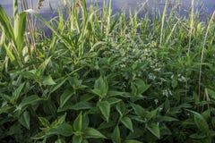 Plants生长近的湖 免版税库存图片