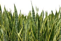 Free Plants Stock Photography - 1199122