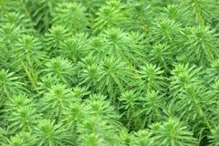 Plants Royalty Free Stock Photo