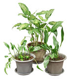 Plants Royalty Free Stock Image