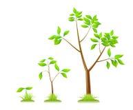 Plants. Stock Photos
