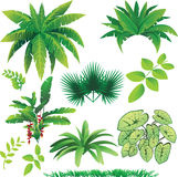 Plants. Vector illustration of many plants, great collection for nature design Stock Image