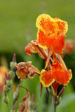 Plants. Orange flowers Stock Image