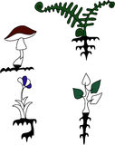 Plants Royalty Free Stock Images