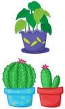 Plants Stock Image