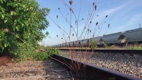 Plants on abandoned railroad stock video