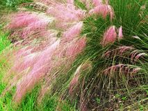 Plants Ablaze Royalty Free Stock Photography