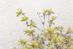 Plants Agains White Wall Stock Images