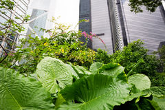 Plants against a background of skyscrapers Royalty Free Stock Photo