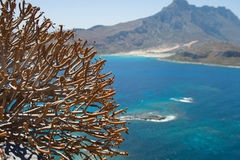 Plants against the blue sea and mountains Stock Photography
