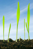 Plants against a sky Royalty Free Stock Photos