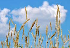 Plants against the sky Royalty Free Stock Photo