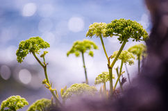 Plants in Agios Gordios. Shot taken in Agios Gordios, Greese, in 2014 stock photography