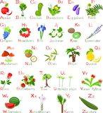 Plants alphabet Stock Images