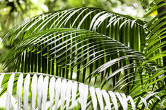 Plants in Amazon Forest, Brazil Stock Image