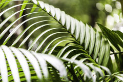 Plants in Amazon Forest, Brazil Stock Photography